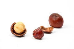 Macadamia nut and shell Stock Images