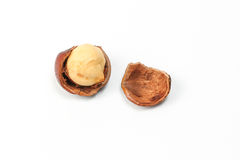 Macadamia nut and shell Royalty Free Stock Images
