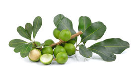 Macadamia nut on white background Royalty Free Stock Images