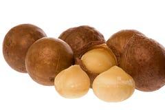 Macadamia Nuts. Isolated macro image of Macadamia nuts Stock Photos