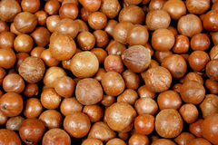 Macadamia nuts. Close up of macadamia nuts before processing Royalty Free Stock Photography