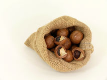 Macadamia Royalty Free Stock Photo