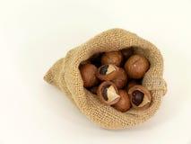 Macadamia Royalty Free Stock Photo