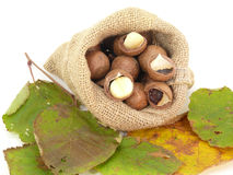 Macadamia Royalty Free Stock Images