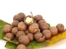 Macadamia Stock Photography