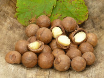 Macadamia Stock Photo