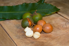 Macadamia nuts close up Royalty Free Stock Photography