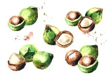 Macadamia nuts compositions set isolated on white background. Watercolor hand-drawn illustration Stock Photos