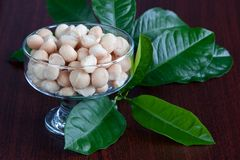 Macadamia. Nuts in the dessert bowl  and green leaves Royalty Free Stock Image