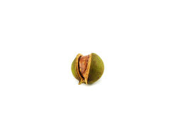 Macadamia nuts Royalty Free Stock Image