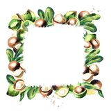 Macadamia nuts and leaves square background. Royalty Free Stock Image