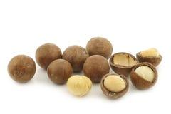 Macadamia nuts (Macadamia tetraphylla) Royalty Free Stock Images