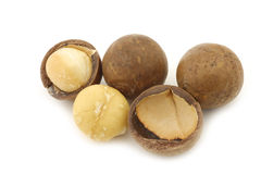 Macadamia nuts (Macadamia tetraphylla) Royalty Free Stock Photos