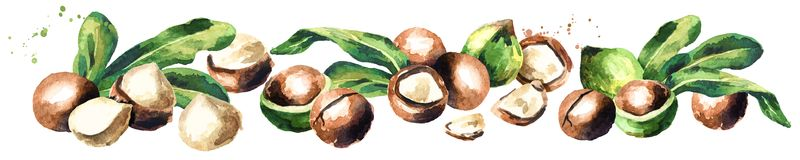 Macadamia nuts panoramic image on white background. Watercolor hand drawn illustration Royalty Free Stock Photography