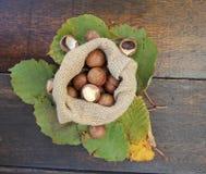 Macadamia Royalty Free Stock Photography