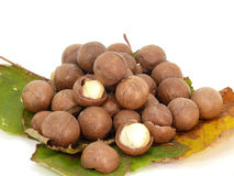 Macadamia Stock Photos