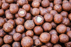 Macadamia nuts. Stock Images