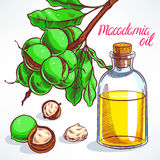 Macadamia oil Stock Photography