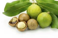 Macadamia in schil en shell Stock Afbeeldingen
