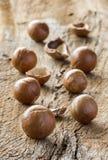 Macadamia in shell Royalty-vrije Stock Afbeeldingen