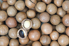 Macadamia vruchten Stock Foto's