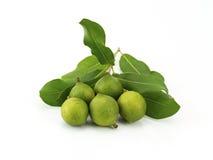Macadamia w plewie Obrazy Royalty Free