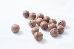 Macadamiamutter Royaltyfri Fotografi