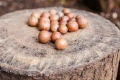 Macadamianüsse Stockbild