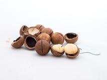 Macadamianüsse trägt mit Oberteil auf weißem Hintergrund Früchte Stockfoto