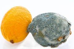 macanie świeże cytryny inny podgniły macanie fotografia royalty free