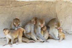 macaque Στοκ φωτογραφία με δικαίωμα ελεύθερης χρήσης