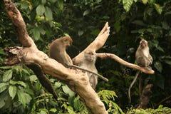 macaque image libre de droits