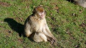 macaque filme