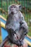 Macaque at Batu Caves, Indonesia Stock Photos
