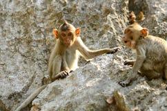 Macaque de cola larga (fascicularis del Macaca) Fotografía de archivo libre de regalías