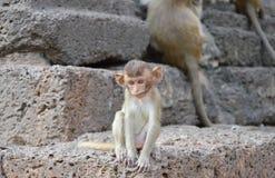 Macaque de la cola larga del bebé que se sienta en roca en la pagoda antigua Tailandia Fotografía de archivo