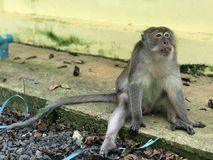 Macaque eats holding something in his hands and eats food while sitting in the Park. Macaque eats holding something in his hands and eats food while sitting stock photos
