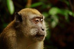 Macaque en la selva imagenes de archivo