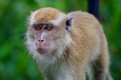 Macaque en la selva foto de archivo