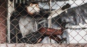 Macaque en una jaula del parque zoológico Fotos de archivo