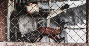 Macaque en una jaula del parque zoológico Foto de archivo