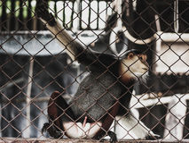 Macaque en una jaula del parque zoológico Imágenes de archivo libres de regalías