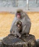 Macaque giapponese Madre con un bambino fotografie stock
