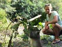Macaque grappig met een slimme blik die een tak houden, en blond g stock afbeeldingen