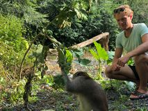 Macaque grappig met een slimme blik die een tak houden, en blond g royalty-vrije stock afbeelding