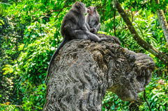 Macaque in the Hindu temple in Monkey Forest, Ubud, Bali Stock Photography