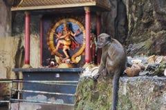 Macaque i de Batu grottorna royaltyfri foto