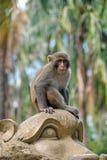 Macaque i Vietnam fotografering för bildbyråer