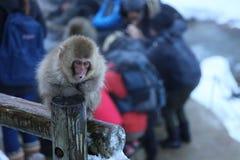 Macaque japonés en Nagano Imágenes de archivo libres de regalías