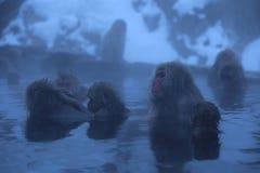 Macaque japonés en Onsen Fotos de archivo libres de regalías